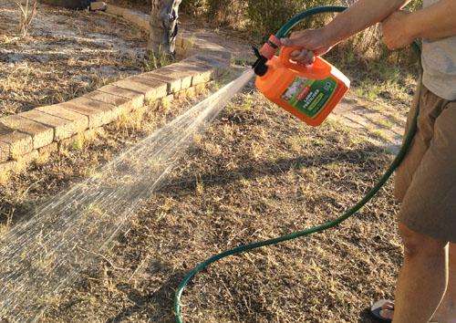 パースの芝生肥料2