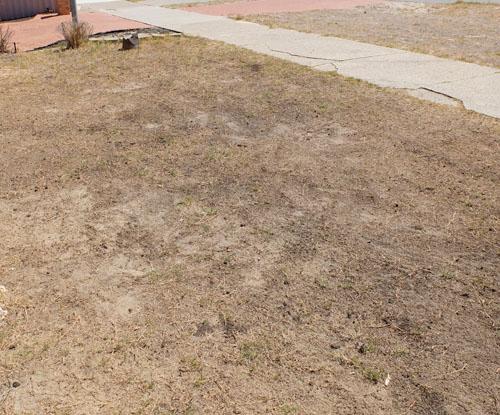 パースの芝生3月
