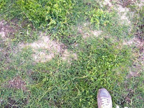 パースの芝生5月2