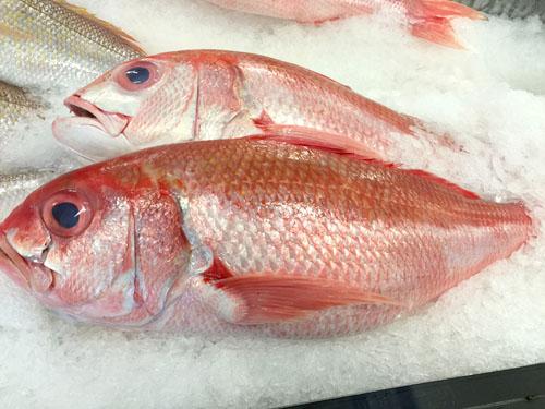 オーストラリアの魚1