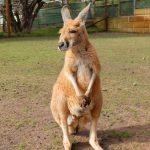 なぜ私達がオーストラリアの永住権をめざしたか。